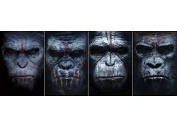 猿星球,猿星球的黎明,类人猿,电影,科幻小说,大学99918