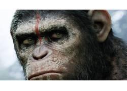 猿星球,电影,艺术品,科幻小说,猿星球的黎明34321