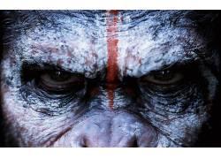 猿星球的黎明,猿星球,类人猿,电影100132