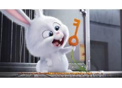 电影,兔,宠物的秘密生活413916