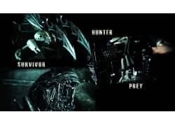 捕食者(电影),电影,外星人(电影)51836