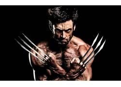 休杰克曼,金刚狼,X战警,的adamantium,爪,电影,男人,演员,肌肉989