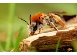 动物,宏,膜翅目,昆虫285175