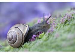 动物,宏,蜗牛287882