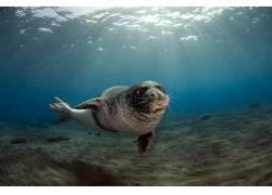 动物,密封件,水下229590