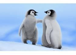 动物,小动物,企鹅,鸟类185946