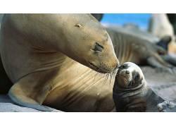 动物,小动物,性质,海狮,胡子170369