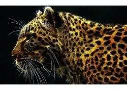 Fractalius,动物,豹(动物)56067