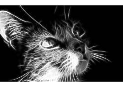 Fractalius,猫,单色,数字艺术,动物9925