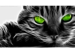 Fractalius,猫,数字艺术,动物55405