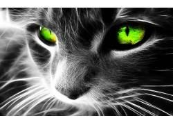 Fractalius,猫,绿眼睛,选择性着色,动物,数字艺术76425