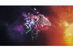 Photoshop中,动物,华美,斑马349733