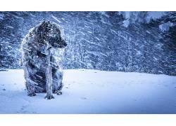 冬季,狗,雪,动物,性质167524