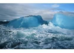 冰,企鹅,动物,冰山,性质,北极,海74601