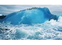 冰,企鹅,性质,冰山,动物,鸟类178574