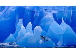 冰,冰川,企鹅,动物,冰山,鸟类178541