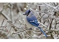 冰,鸟类,蓝色,动物25686