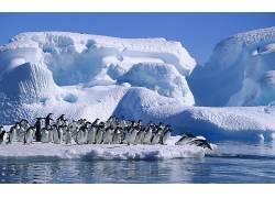 冰山,海,鸟类,企鹅,动物102194
