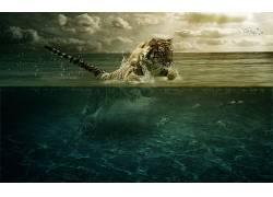 动漫,鱼,数字艺术,跳跃,拆分视图,海,虎,动物,大气层,猫,大猫,水1