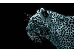 动物,Fractalius,豹(动物)41495