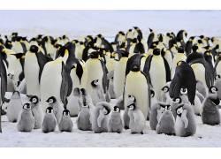 动物,企鹅,鸟类,小动物190226