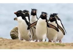 动物,企鹅,鸟类190214