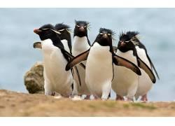 动物,企鹅,鸟类270603