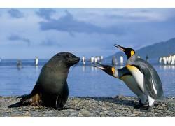 动物,企鹅190231