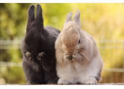 动物,兔,兔子耳朵22771