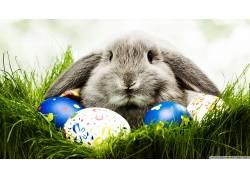 动物,兔,复活节,蛋169744