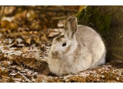动物,兔,性质136509