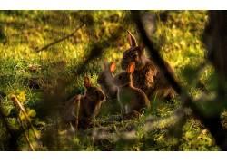 动物,兔,树枝,小动物,草136530