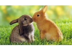 动物,兔,草146544