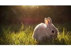动物,兔137149