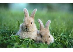 动物,兔190979