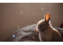 动物,兔206027