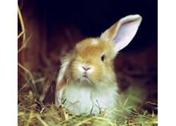 动物,兔229588