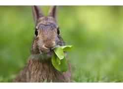 动物,兔275498