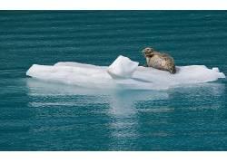 动物,冰,水124930
