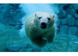 动物,北极熊,性质180360