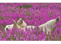 动物,北极熊,花卉136540