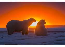 动物,北极熊,阳光,日落,冰238199
