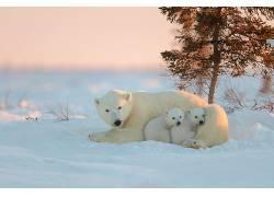动物,北极熊,雪,小动物229576