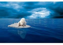 动物,北极熊154674