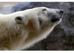 动物,北极熊262501