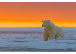 动物,北极熊278219
