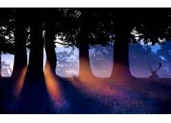 动物,太阳光线,阳光,鹿,树木,森林,轮廓52131