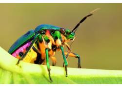 动物,宏,昆虫339367