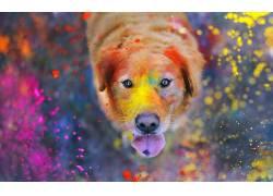 动物,华美,绘画,油漆飞溅,狗,拉布拉多寻回犬25486