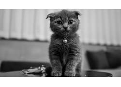动物,单色,猫136661